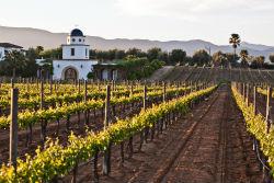 San-Diego-AMA-Hispanic-Marketing-SIG-Wine-Tasting-Guadalupe-Valley-250px