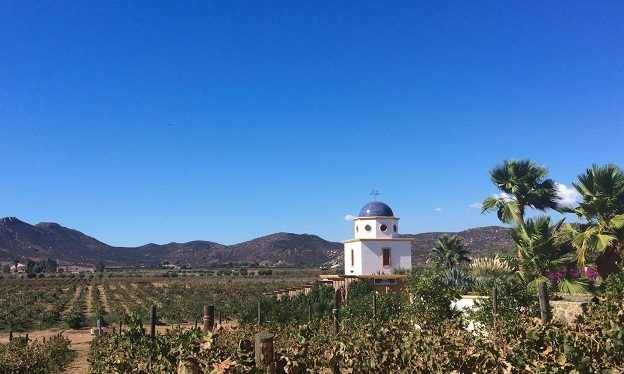 Hispanic Marketing SIG: Wine Tour in Mexico